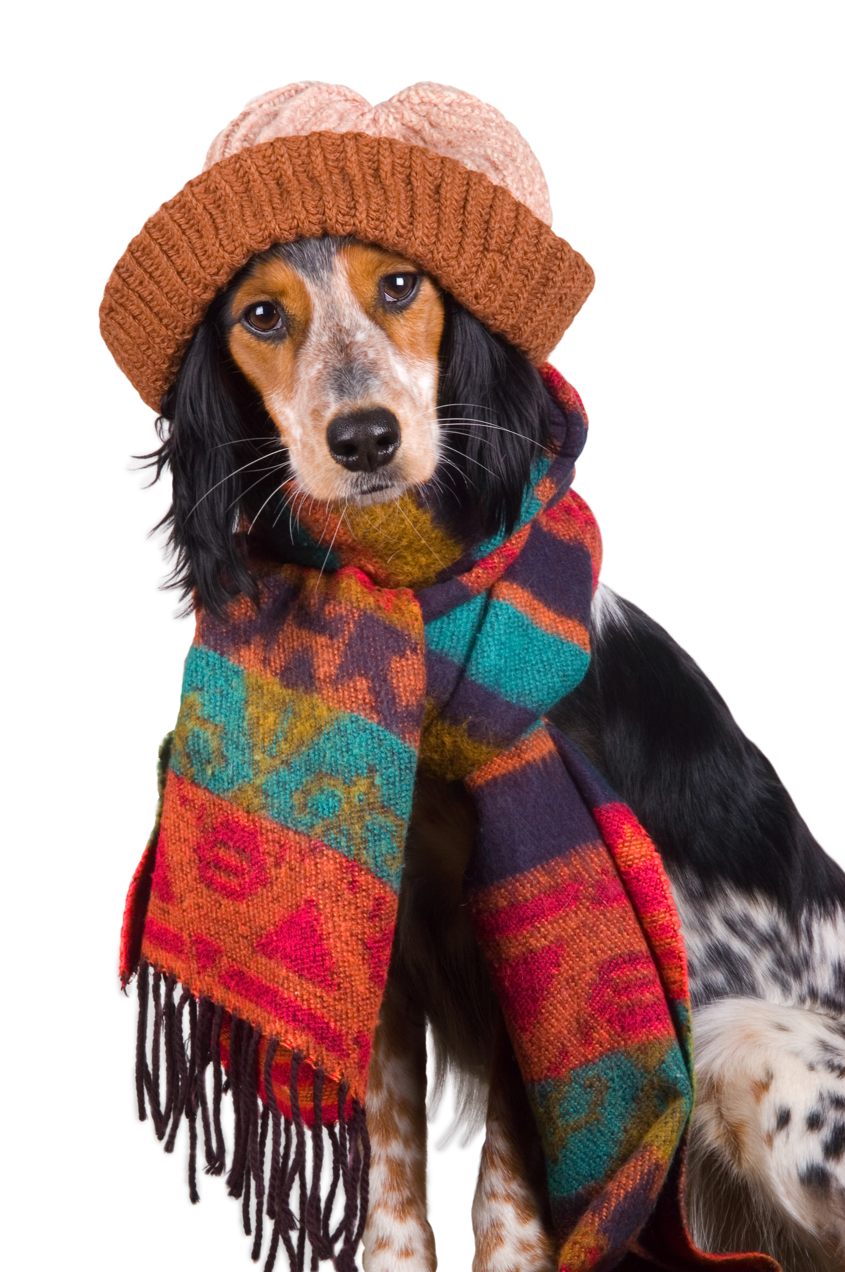 Winter Tips For Keeping Columbus Dogs Warm