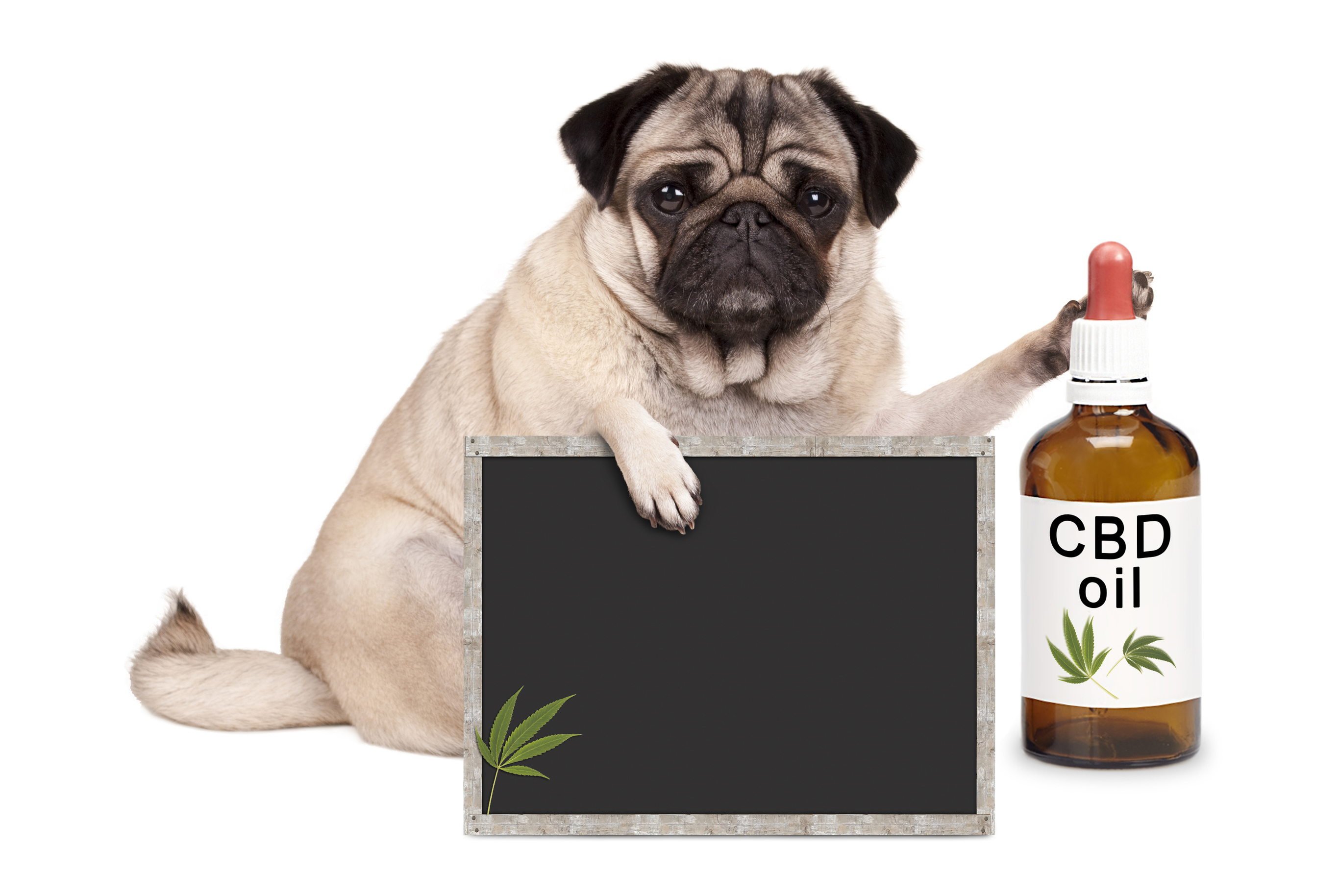 CBD oils for Dogs - Review